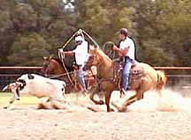 Ropro Training Systems Home Of Upfront Team Roping